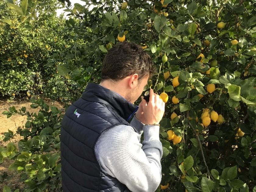 Fitoser Agro estudio biodiversidad cítricos