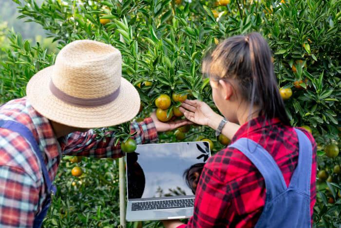 fitoser agro asesoróa agrícola